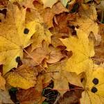 Осень в Борках